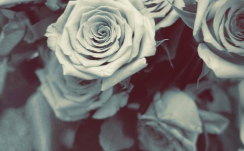 Aih_Monochrome Flowers_YENkSQ