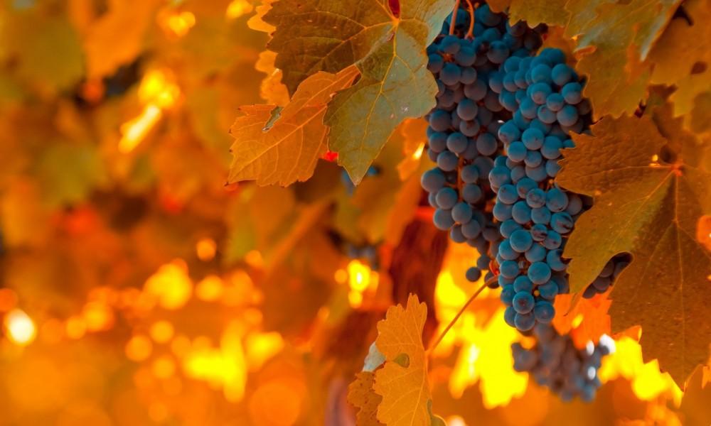 Cabecera Entre viñedos by paginasdechocolate