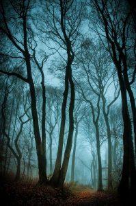 bruma-azul-bosque